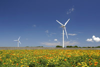 風力発電機とマリーゴールド